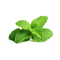 Peppermint Scent